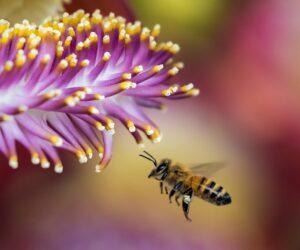 Was kann ich für den Bienenschutz tun?