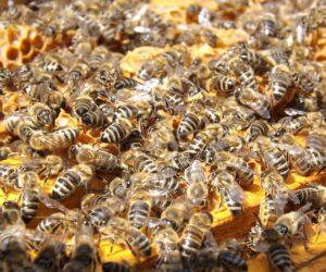 Alles über Bienen