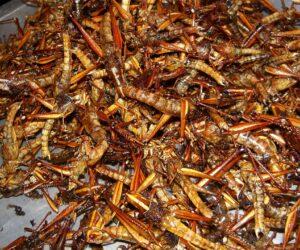 Fankultur: Kochen mit Insekten