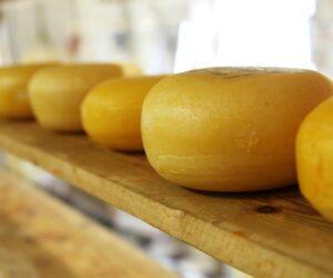 Käseherstellung in Münster