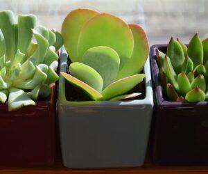 Zimmerpflanzen Know-How