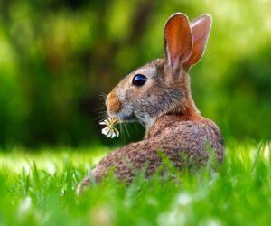 Wo kommen eigentlich die Kaninchen her?