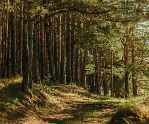 Bäume kämpfen mit Trockenheit