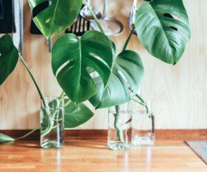 Wie nachhaltig sind eigentlich Zimmerpflanzen?