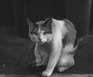 Catcalling - ein Kommentar