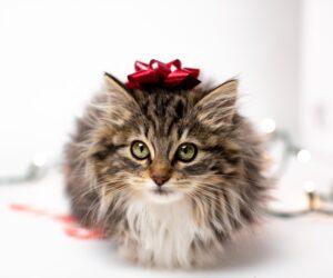 Tierheime in der Weihnachtszeit