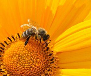 Mehr Insekten auf unseren Ackerfeldern!
